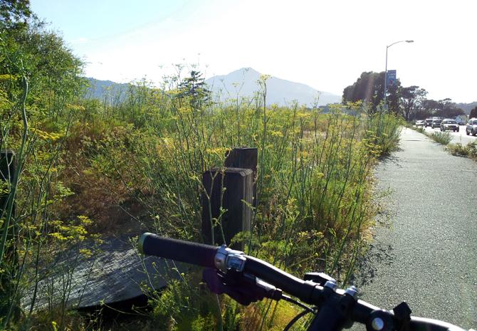 Mt. Tamalpais, August 2, 2012