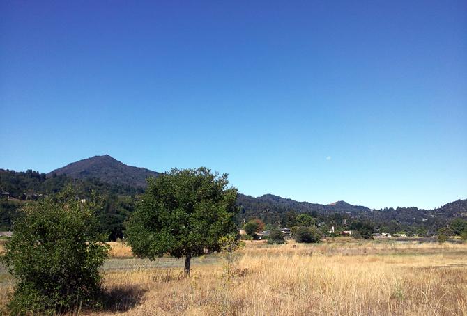 Mt. Tamalpais, August 6, 2012