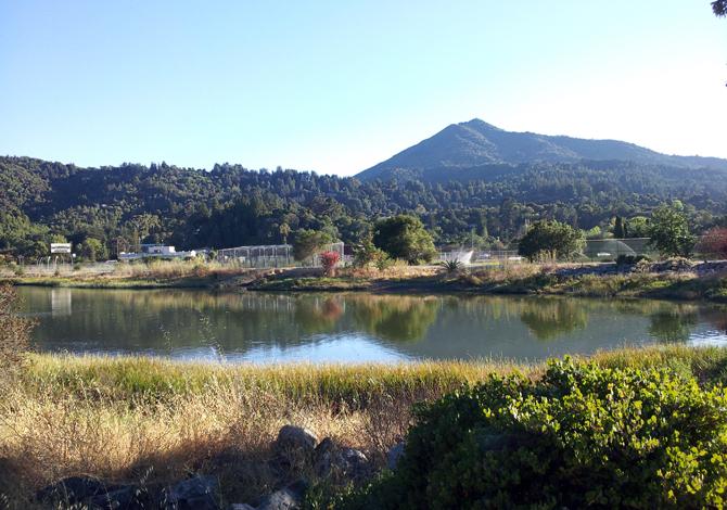 Mt. Tamalpais, August 7, 2012