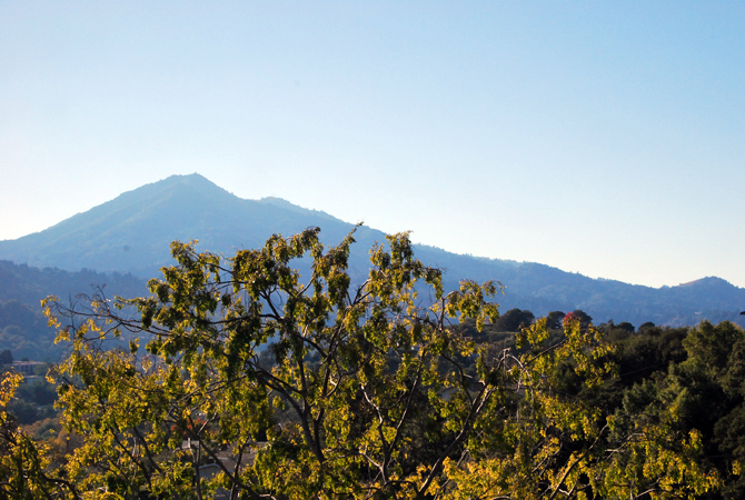 Mt. Tamalpais, November 14, 2012