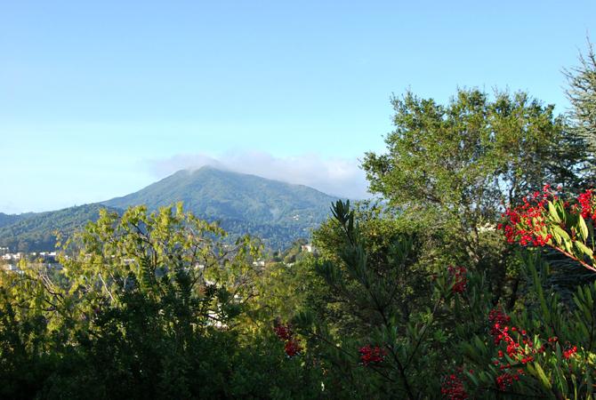 Mt. Tamalpais, November 21, 2012