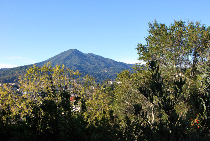 Mt. Tamalpais, December 18, 2012