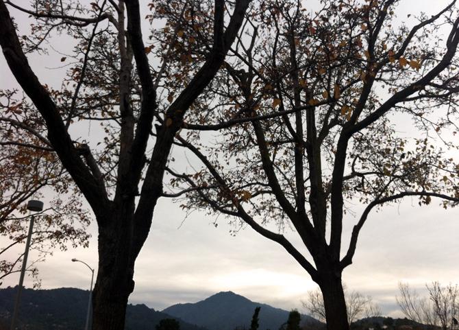 Mt. Tamalpais, December 28, 2012